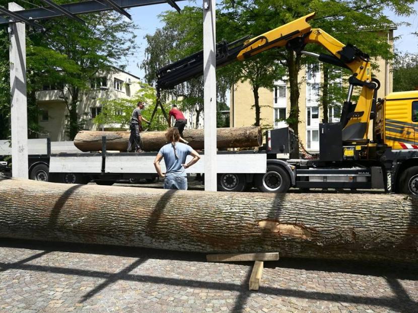 Debli sta na Špici / the logs are inplace